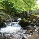 eau de roche